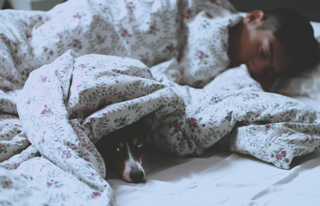 Dog lying in owner's bed