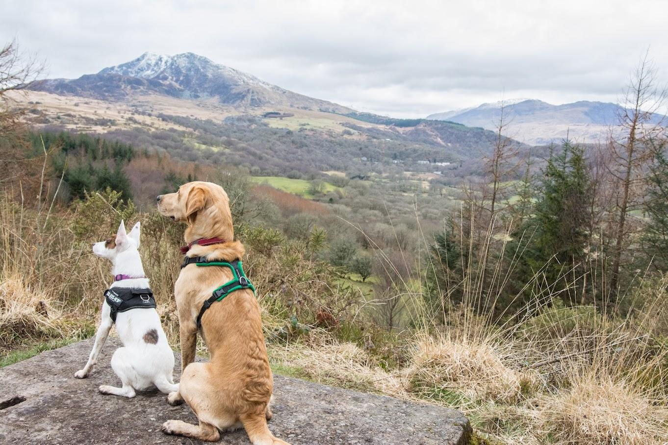 Pure Connection Dog Training Tenterden