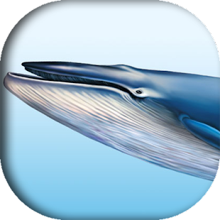 Blue whale (helping game) - náhled