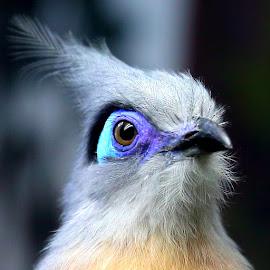by Mike Vaughn - Animals Birds (  )