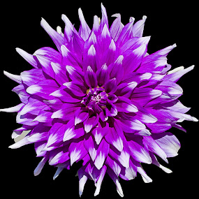 by Havneet Singh - Nature Up Close Flowers - 2011-2013 (  )