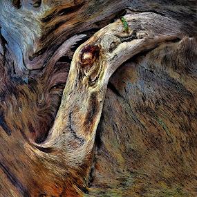 Driftwood Monster.  by Christopher Barker - Abstract Fire & Fireworks ( driftwood, new, detail, 2013, monster, wood, fresh, 2014, quality, award, win, closeup )