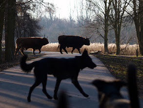 Photo: We laten deze wel erg grote hondjes maar eerst even passeren.;)