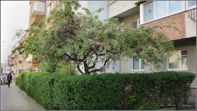 Photo: 2016.04.17 - de pe Str. Libertatii