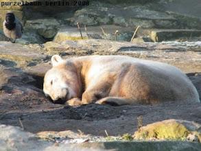 Photo: Ein Nickerchen muss jetzt einfach sein :-)