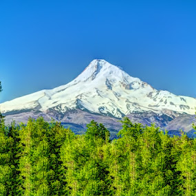 Mt.Hood by John Broughton - Landscapes Mountains & Hills ( mountain, trees, mpunt hood, evergreen trees, snow capped hills )
