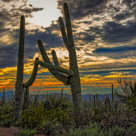 by Ron Meyers - Landscapes Deserts