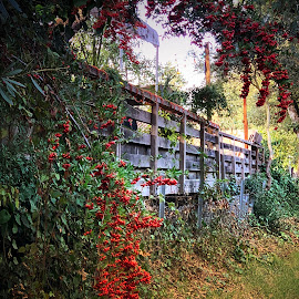 Walks Along the Creek by Leslie Hunziker - Instagram & Mobile iPhone ( creek path, countryside, plants, backyards, berries,  )