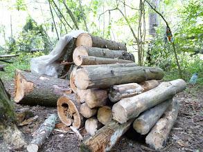 Photo: Вот они где, старые нары.  Теперь они просто дрова