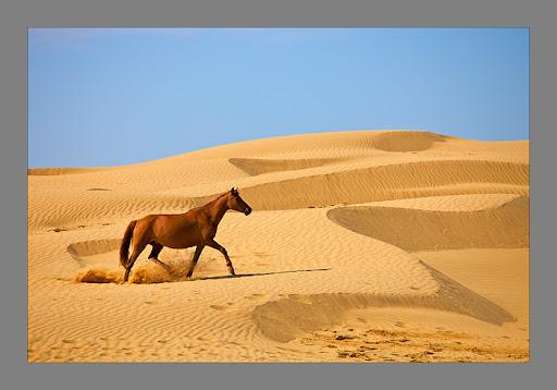 Места росии где встречается песок
