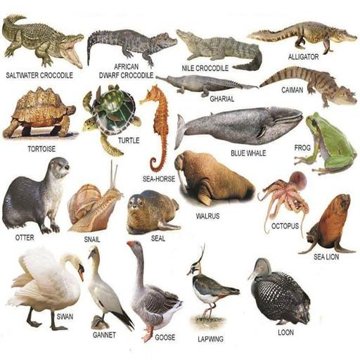 Learn The Names of Animal for Kids