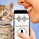 Cat language translator joke (game)
