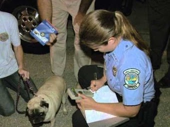 Odd Arrests #2