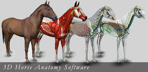 3d horse anatomy software free download for pc