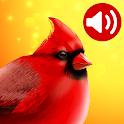 Bird Songs: Ringtones icon