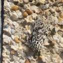 Unknown spotting
