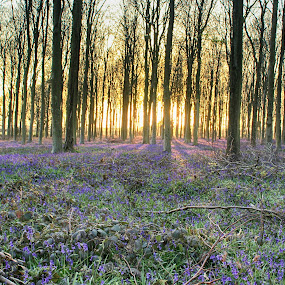 by Paul Jenking - Landscapes Forests