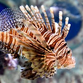 Sea Creature  by Lorraine D.  Heaney - Animals Sea Creatures (  )