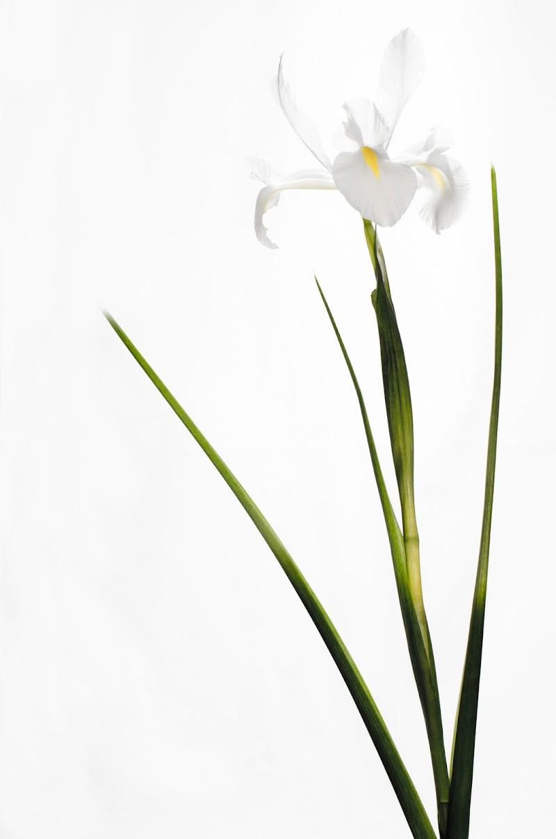 Bianco su Bianco di Andrea Frati