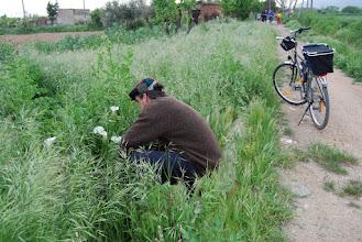 Photo: el Pedro, collint lliris amagats per l'herba