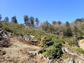 伐採地を登る