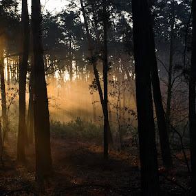 Mysterious forest 2 by Jiří Valíček - Landscapes Forests ( mysterious, forest,  )