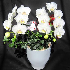 母の日プレゼント用の花