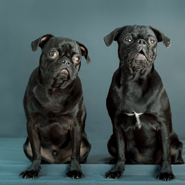 Maxi en Kiara. by Susan Pretorius - Animals - Dogs Portraits (  )