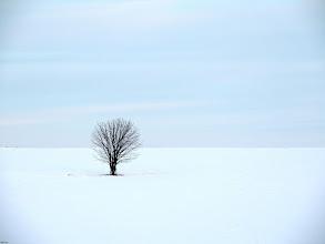 Photo: resistance  #treetuesday // +Tree Tuesdaycurated by +Christina Lawrieand +Shannon S. Myers #fotoamateur // +Fotoamateur #photplusextract by +Jarek Klimek