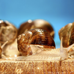 party by Mihai Cristian - Animals Other ( snails, calm, desire, speed, green, slow motion, run, deep )