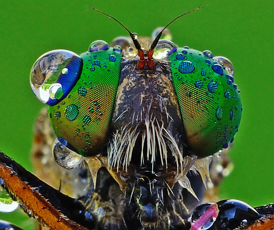 by Woe Hendrik husin - Animals Insects & Spiders ( teman )