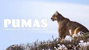 Pumas: Legends of the Ice Mountains thumbnail