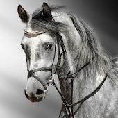 Horse HD Puzzles Jigsaw