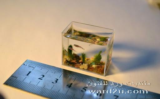 أصغر حوض للأسماك فى موسوعه جينيس