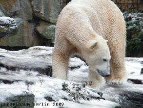 Photo: Was macht Gianna da unten, fragt sich Knut ;-)