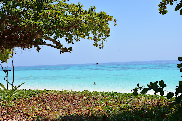 Lush green trees combined with crystal clear water on Koh Rok Nok