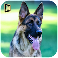 Real Dog Shephard World SIM apk