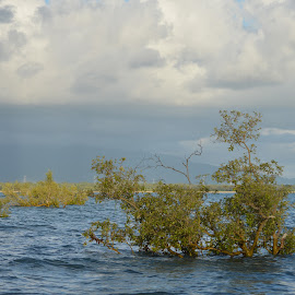 Flooded Trees by Ruth Tomlinson - Landscapes Beaches