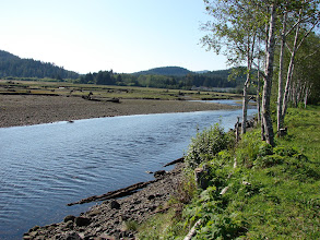 Photo: The Quatse River in Port Hardy where this years trip started.