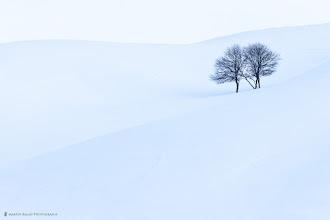 Photo: Apple Trees (Landscape)