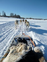 Sled dog initiation