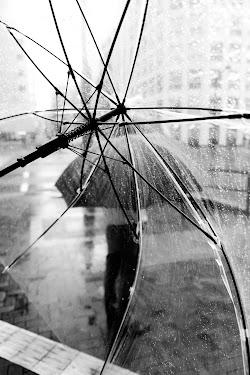 Through The Umbrella