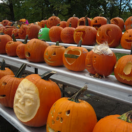 Carve Those Pumpkins by Marcia Taylor - Public Holidays Halloween (  )