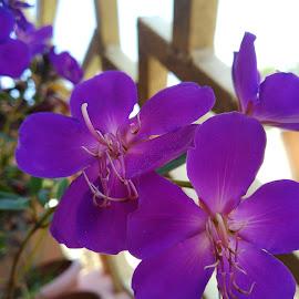 by Soumya Kundu - Novices Only Flowers & Plants