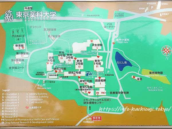 東京薬科大学 地図