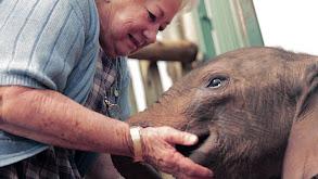 The Elephant Who Found a Mom thumbnail