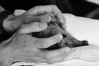 Photo: pupknuffelen