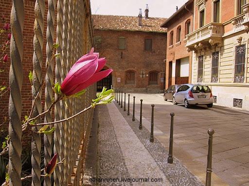 Цветы в ограде монастыря Санта-Мария-делле-Грацие в Милане, Италия