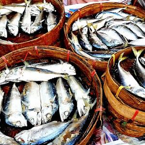 Salted steamed mackerel-1600-Pix.jpg