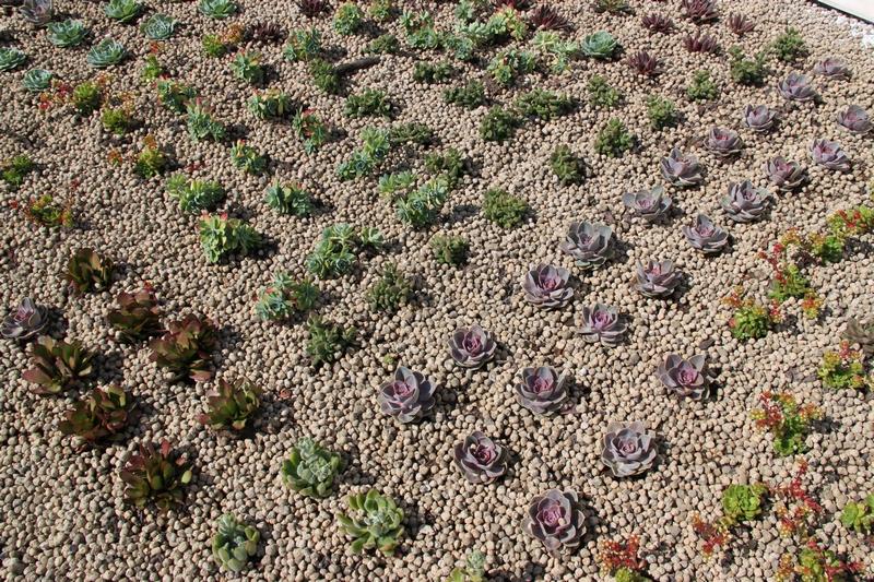 Cubierta ecológica aljibe en Vilamarxant